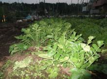 t02200164_0400029811649619458 3種の野菜