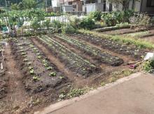 t02200164_0400029811649626760 3種の野菜