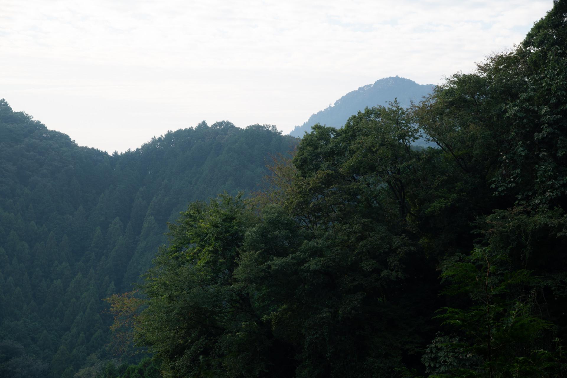 DSC_7952 登山録 今熊山(八王子市上川町)