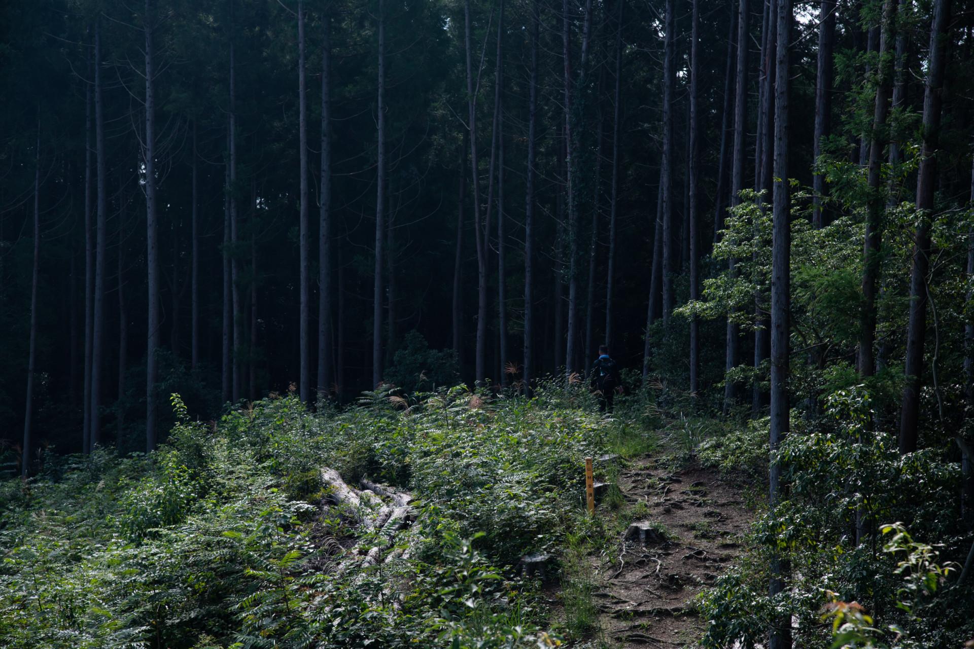 DSC_8067 登山録 今熊山(八王子市上川町)