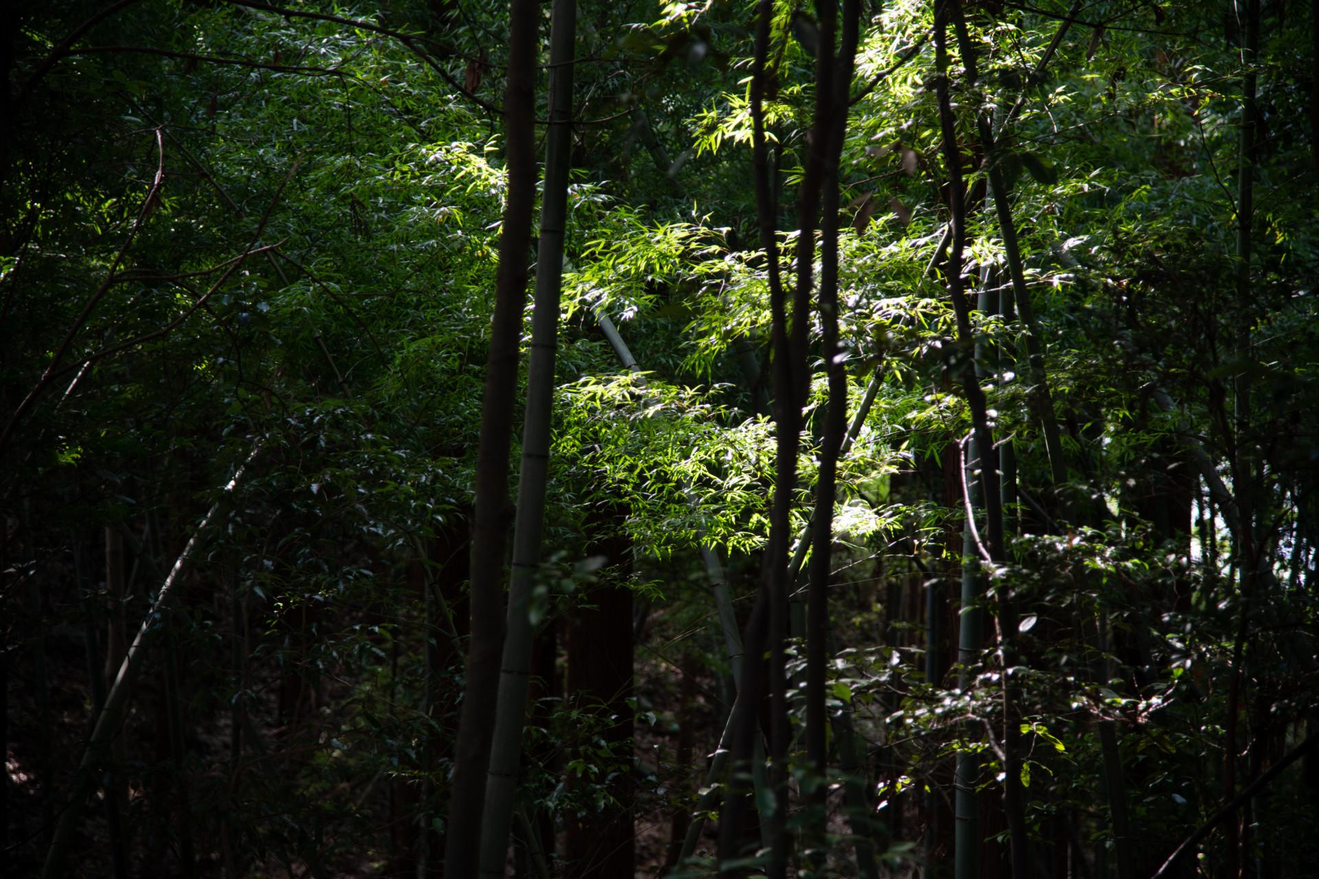 DSC_8075 登山録 今熊山(八王子市上川町)