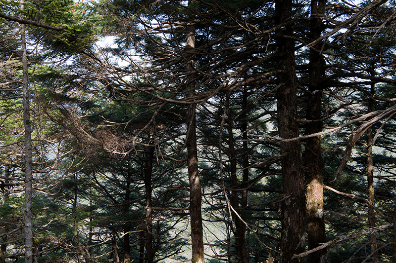 DSC_0544-2 登山録 天狗岳