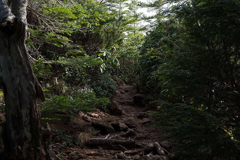 DSC_0545-2 登山録 天狗岳