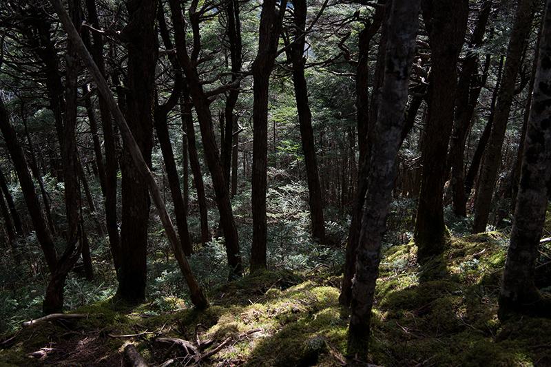 DSC_0550-2 登山録 天狗岳