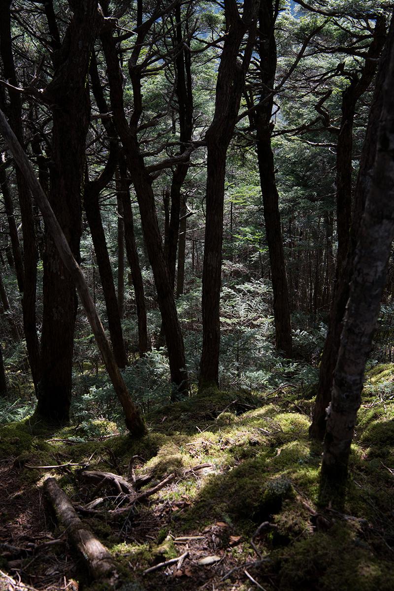 DSC_0551-2 登山録 天狗岳