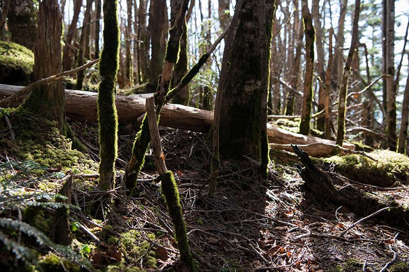 DSC_0564-2 登山録 天狗岳