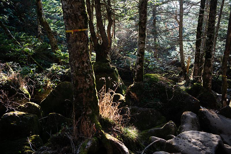 DSC_0727-1 登山録 天狗岳