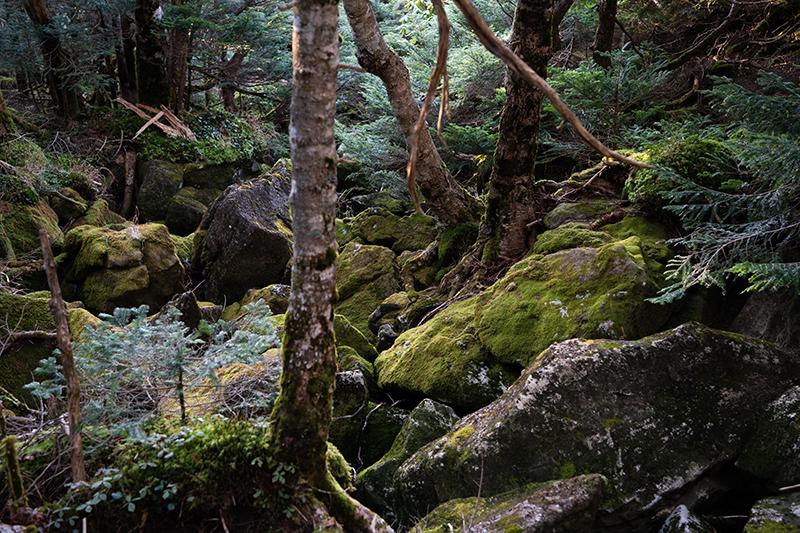 DSC_0730-1 登山録 天狗岳
