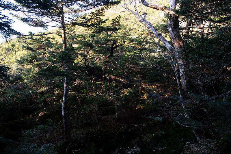 DSC_0735-1 登山録 天狗岳