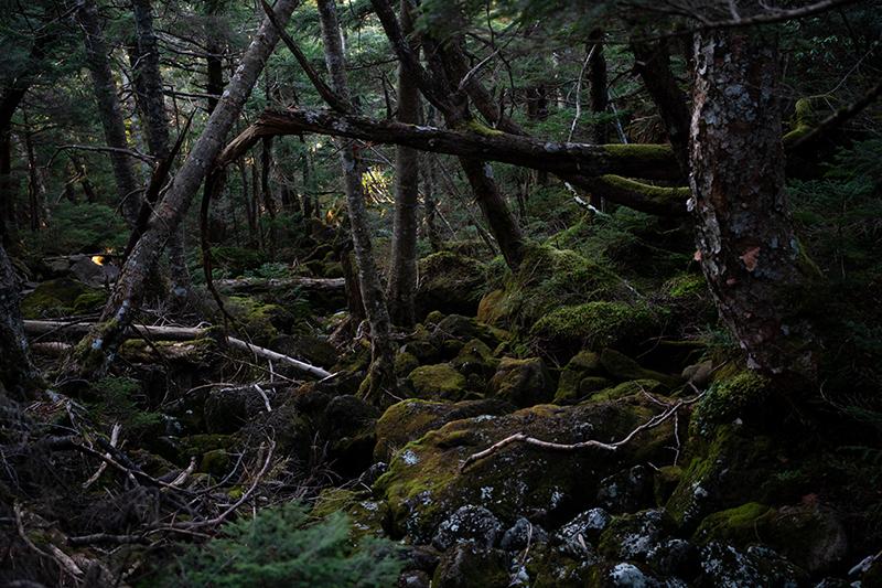 DSC_0744-1 登山録 天狗岳