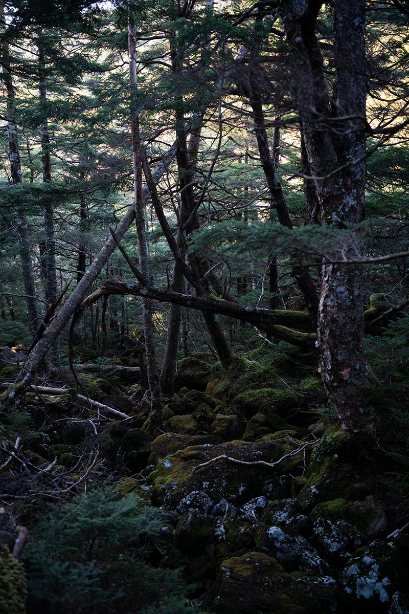 DSC_0745-1 登山録 天狗岳