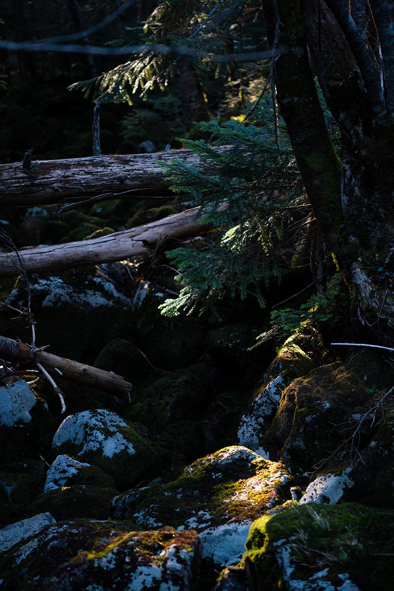 DSC_0751-1 登山録 天狗岳